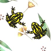 Coroboree Frog Brooch Set By Tantalising Treasures