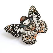 Butterfly Girl Brooch By Laliblue - Coming Soon!