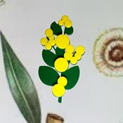 Wattle Brooch By Tantalising Treasures